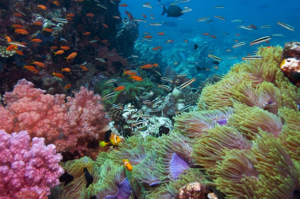 San hô đảo Phú Quốc