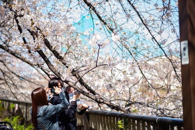 Cảnh đẹp mùa hoa Anh Đào ở Nhật Bản 2021 4