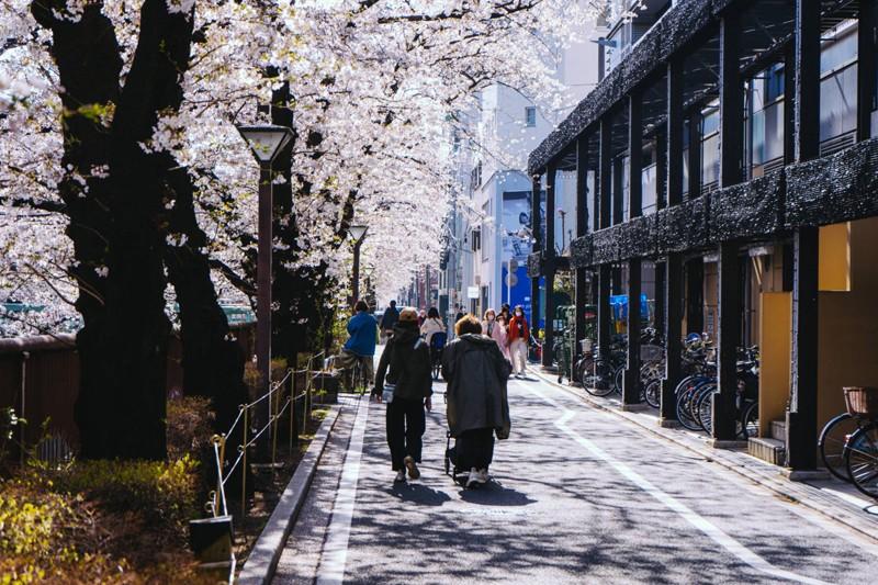 Cảnh đẹp mùa hoa Anh Đào ở Nhật Bản 2021 5