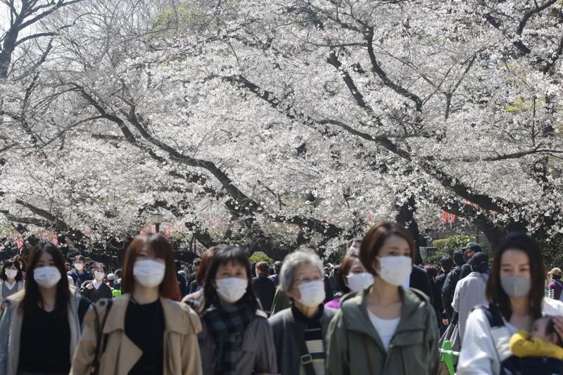 Cảnh đẹp mùa hoa Anh Đào ở Nhật Bản 2021 12