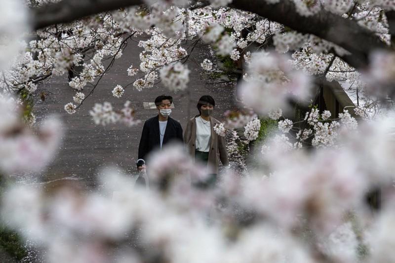 Cảnh đẹp mùa hoa Anh Đào ở Nhật Bản 2021 15