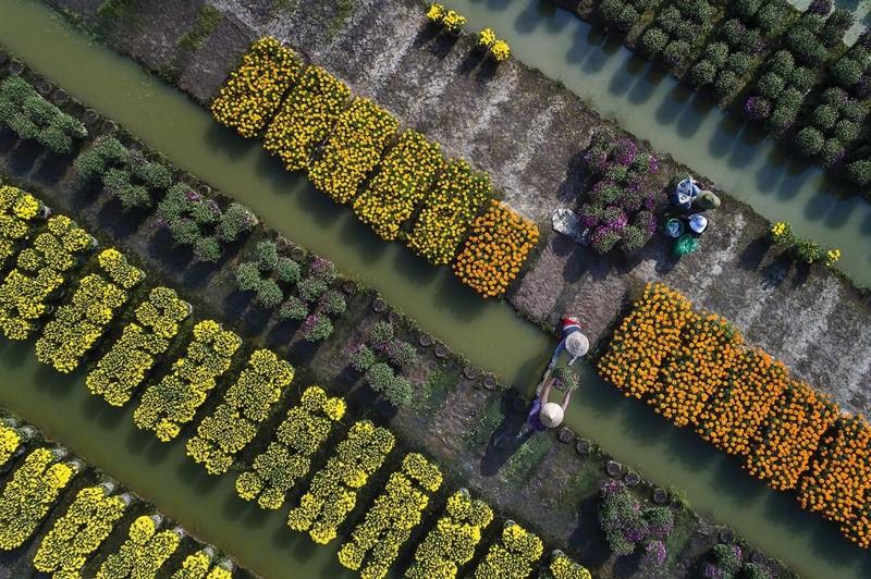 Ngắm bức ảnh đẹp mùa xuân trên quê hương Việt Nam 2021 10