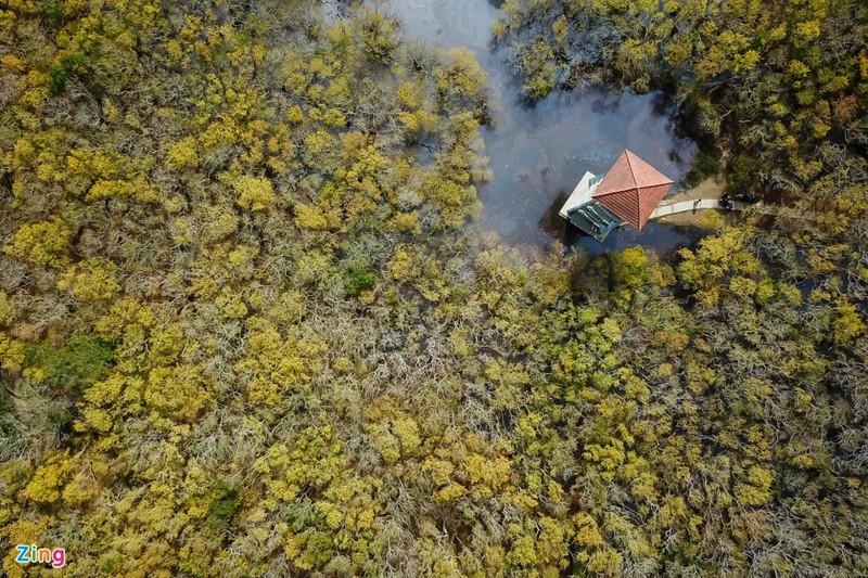 Cảnh đẹp rừng Rú Chá, Huế vào cuối thu 1