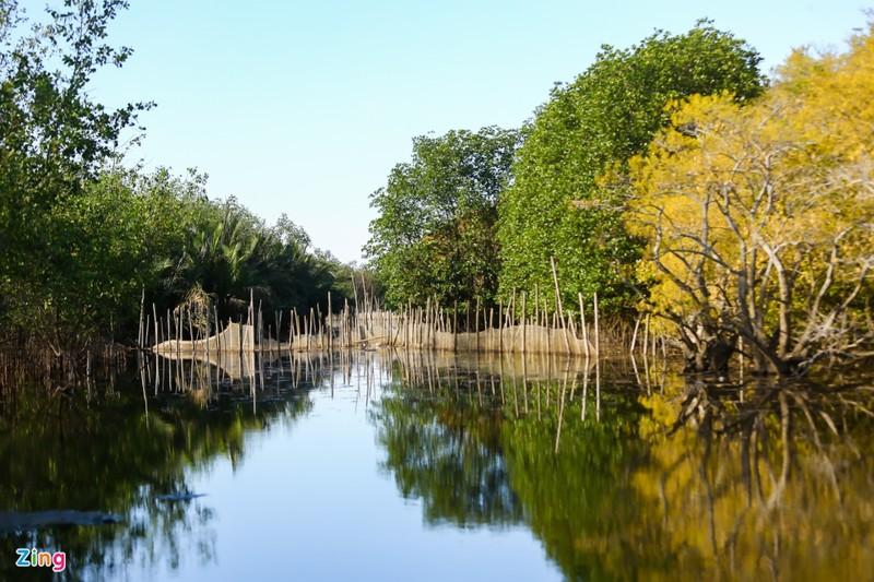 Cảnh đẹp rừng Rú Chá, Huế vào cuối thu 3