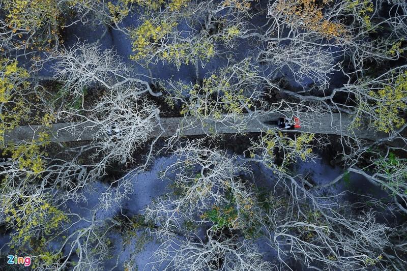 Cảnh đẹp rừng Rú Chá, Huế vào cuối thu 8