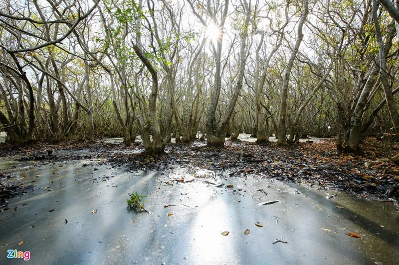 Cảnh đẹp rừng Rú Chá, Huế vào cuối thu 9