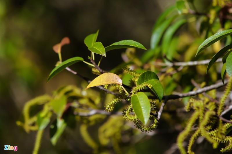 Cảnh đẹp rừng Rú Chá, Huế vào cuối thu 12