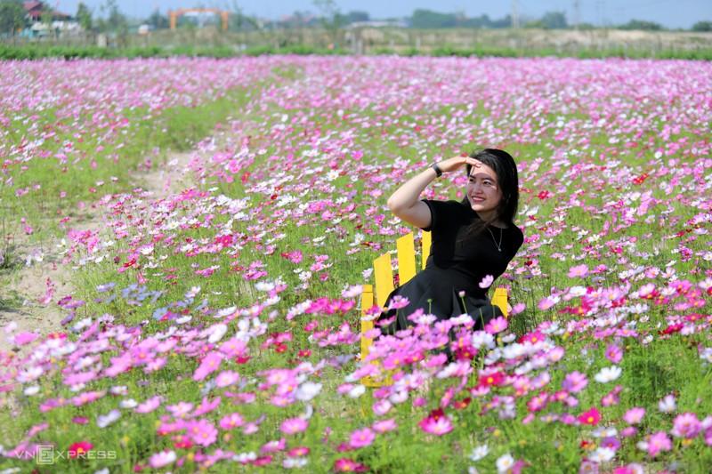 Cánh đồng hoa cánh bướm ở huyện Thạch Hà, Hà Tĩnh 1