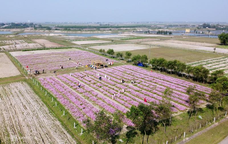 Cánh đồng hoa cánh bướm ở huyện Thạch Hà, Hà Tĩnh 3