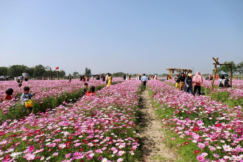 Cánh đồng hoa cánh bướm ở huyện Thạch Hà, Hà Tĩnh 5