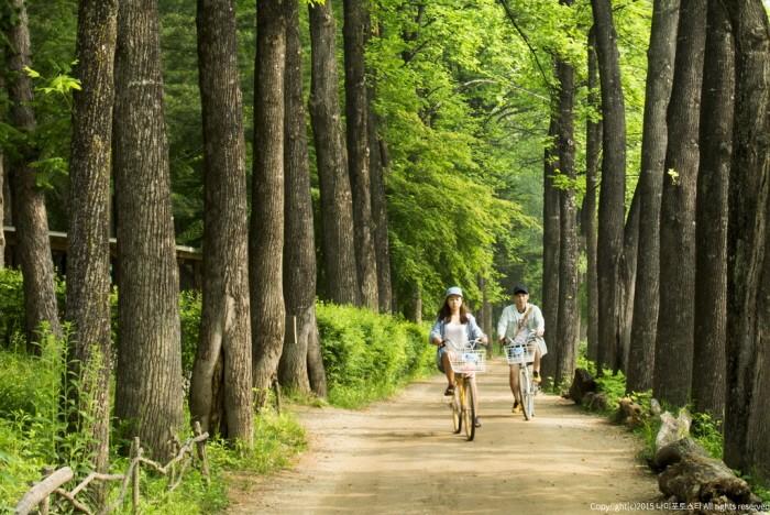 Vẻ đẹp Đảo Nami gần Seoul Hàn Quốc 1