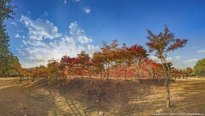 Vẻ đẹp Đảo Nami gần Seoul Hàn Quốc 2