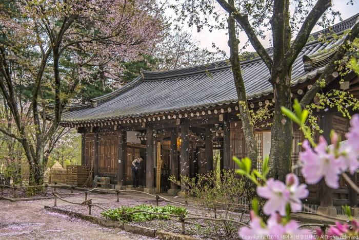 Vẻ đẹp Đảo Nami gần Seoul Hàn Quốc 4