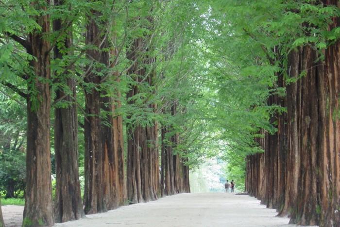 Vẻ đẹp Đảo Nami gần Seoul Hàn Quốc 7