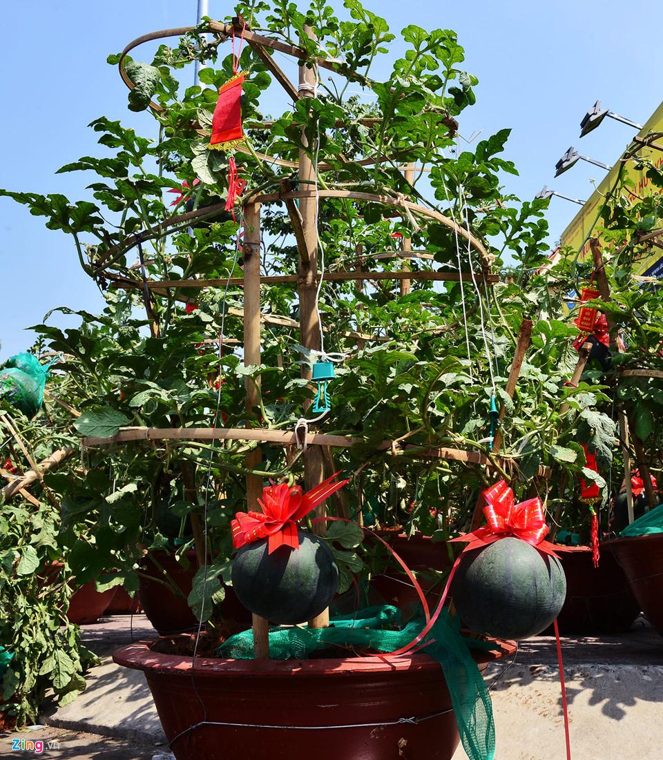 Trái, cây cảnh độc lạ trưng Tết Kỷ Hợi ở TP.HCM 8