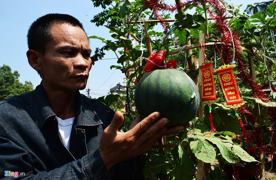 Trái, cây cảnh độc lạ trưng Tết Kỷ Hợi ở TP.HCM 9