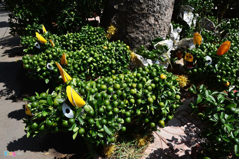 Trái, cây cảnh độc lạ trưng Tết Kỷ Hợi ở TP.HCM 10