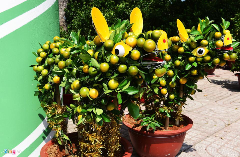 Trái, cây cảnh độc lạ trưng Tết Kỷ Hợi ở TP.HCM 11