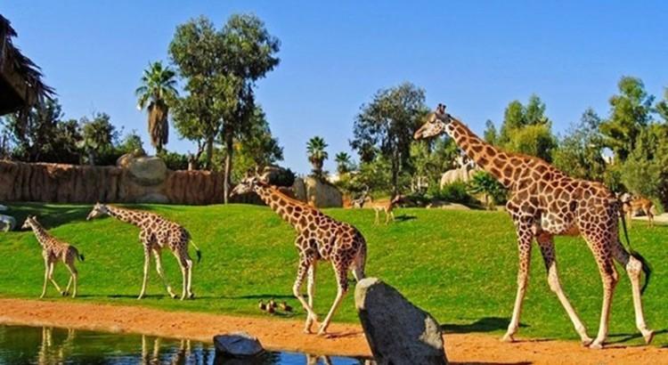 Vườn thú Vinpearl Safari ở đảo Phú Quốc